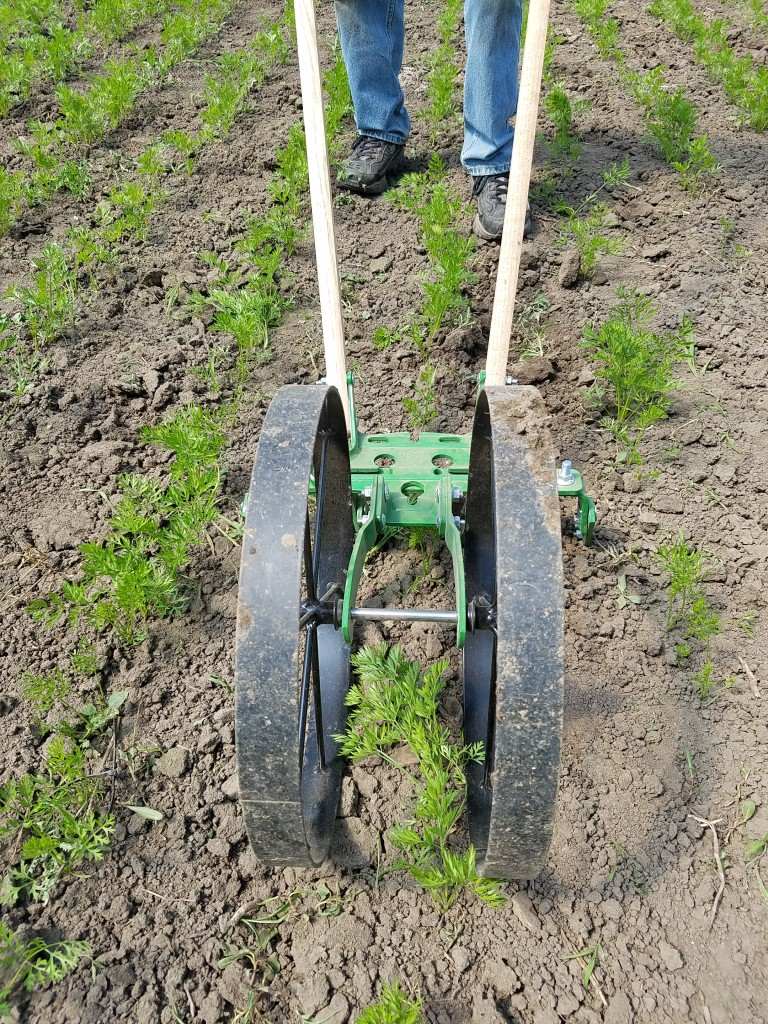 Vern cultivates the carrots ahead of moving the hoophouse for the cucumbers.